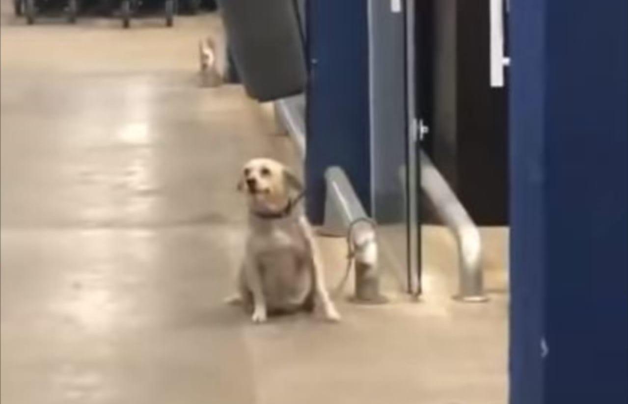 なんてフレンドリーなの!!スーパーの出入口に座っていた犬が、買い物客たちに取ったかわいい『ある行動』とは!!