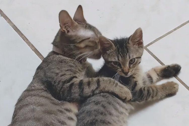 「ママ、ギュってして~」ゴロゴロまったりしていたところにやって来た子猫。抱きしめてあげる母ネコの姿が尊い