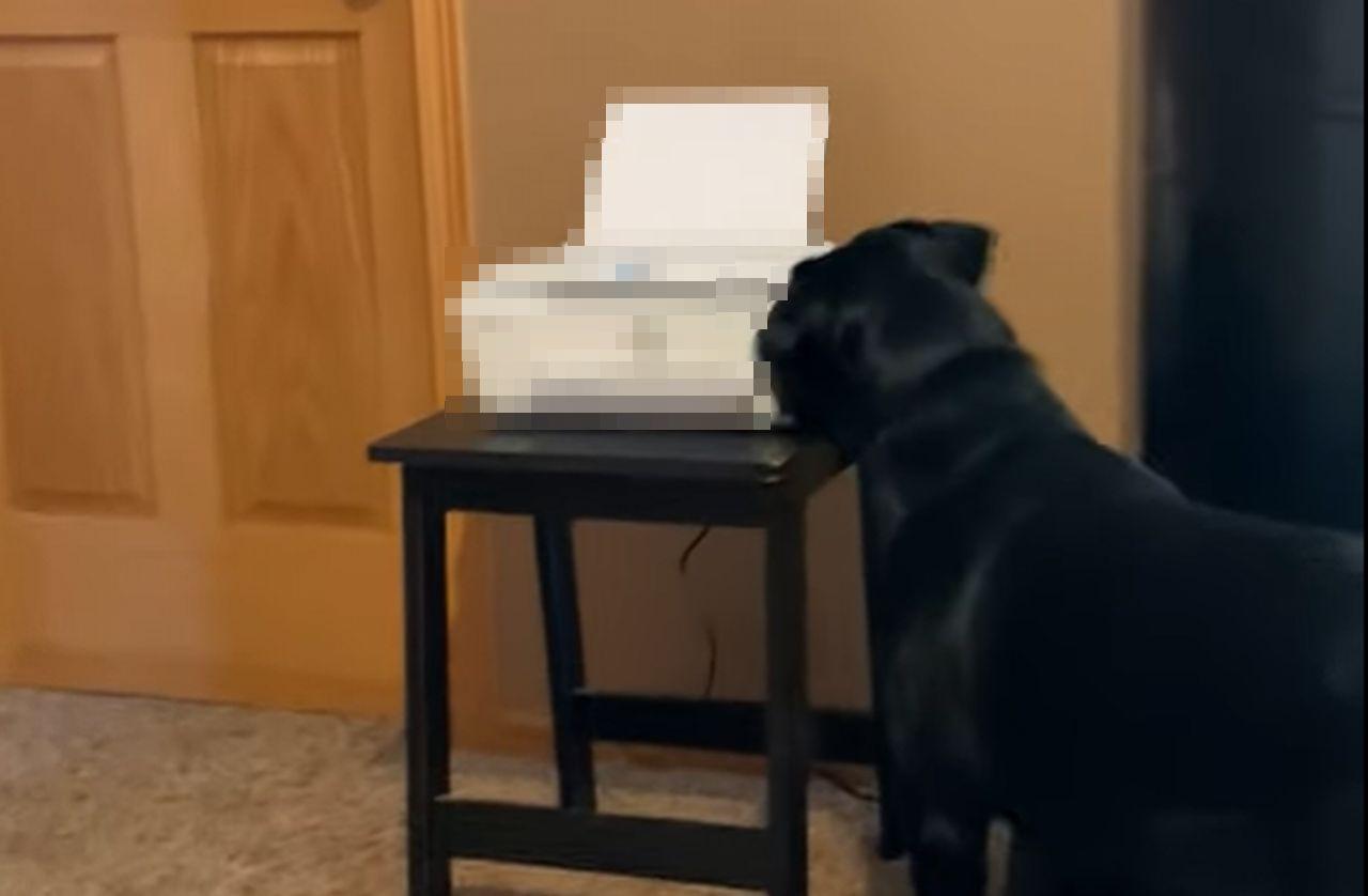 在宅ワーク最強の敵は愛犬?!○○をめぐって今日も競争するのでした・・・