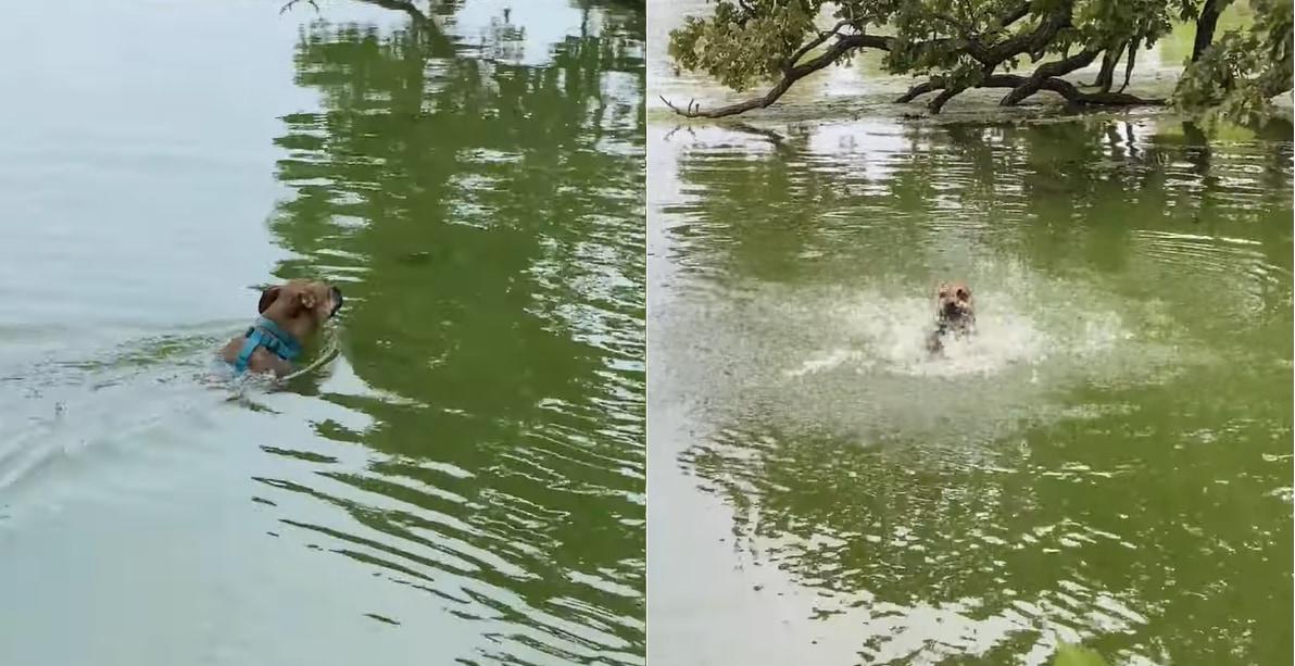 「ビックリしたなあ、もう」優雅に泳ぐ犬には、目の前に現れた木の枝がヘビに見えてしまったようで・・・