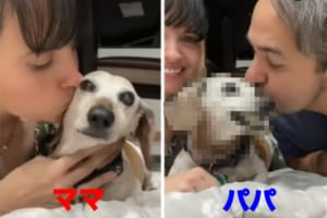 キスしていいのはママだけ!ママとパパが愛犬に交互でキスしたら、反応が露骨に違いました・・・。