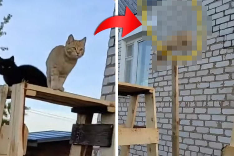まるでネコ版『SASUKE』!カメラの前でスゴ技を披露する2匹のネコの姿が超カッコイイ!