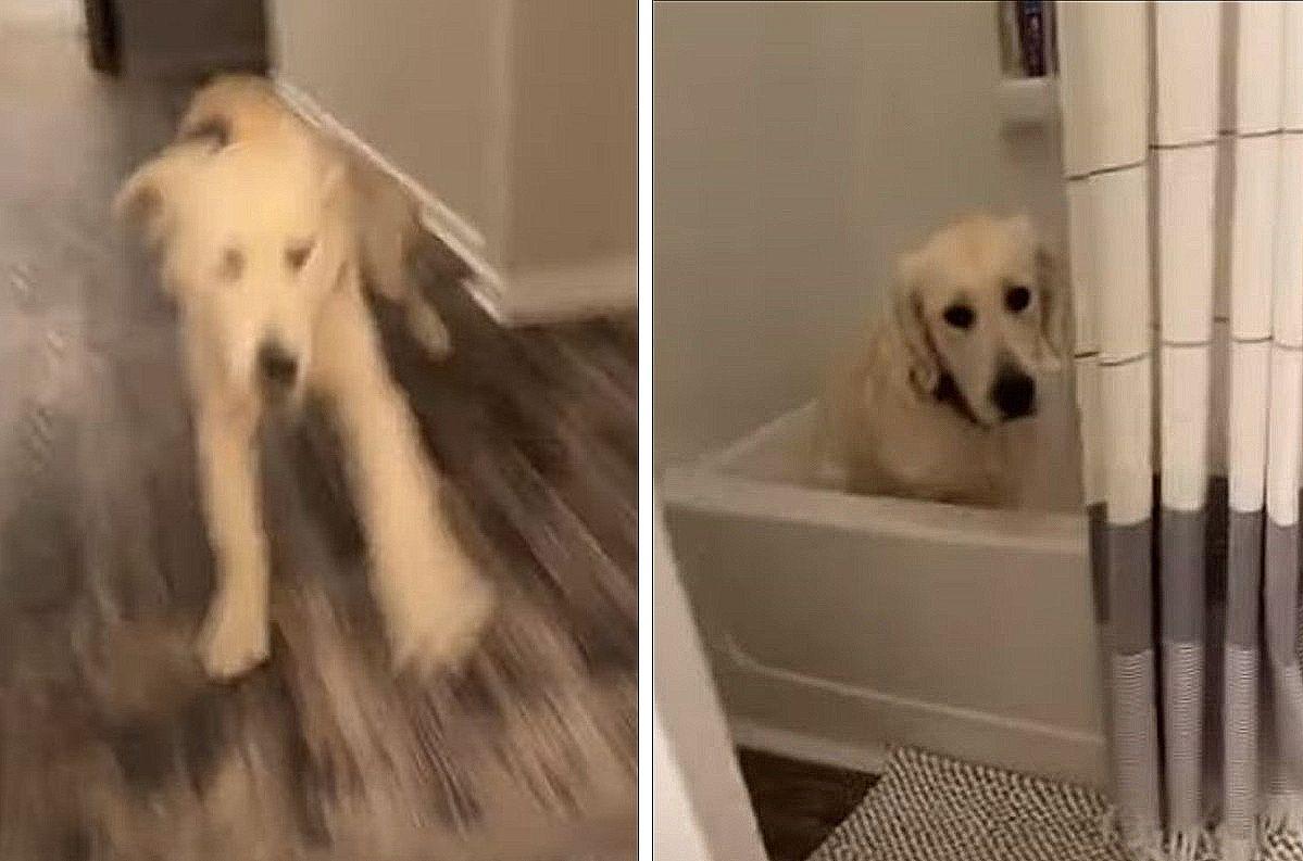 「お風呂大好き!」犬がもの凄い勢いで走っていると思ったら、その行き先は・・・バスタブでした!!