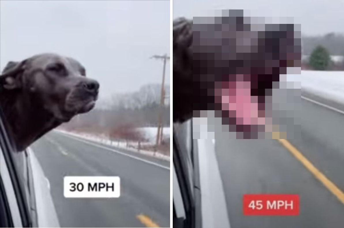スピードメーターを内蔵してる?!車が加速するごとに窓から頭を出す犬の形相が変わっていきました