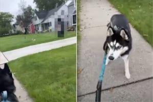 散歩中のハスキー犬がフリーズしちゃった!!その原因となった視線の先にあったものとは?!
