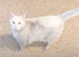 「ひと撫でしていく?」不思議と体を汚して帰って来る愛猫が、実は配達員さんたちのアイドルだったと発覚しました!