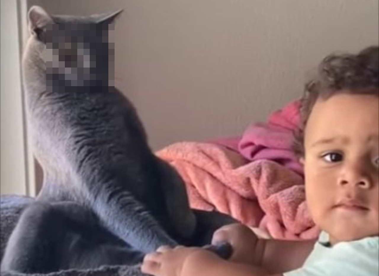 「さて、どうしよう・・・」赤ちゃんへの対応に苦慮した猫。その表情から困っていることがまるわかり!
