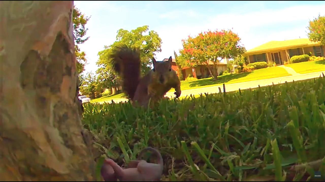 大変!!リスの赤ちゃんが木から落下してる!?その場にすぐ現れ救出していった母リスの行動がカッコイイ