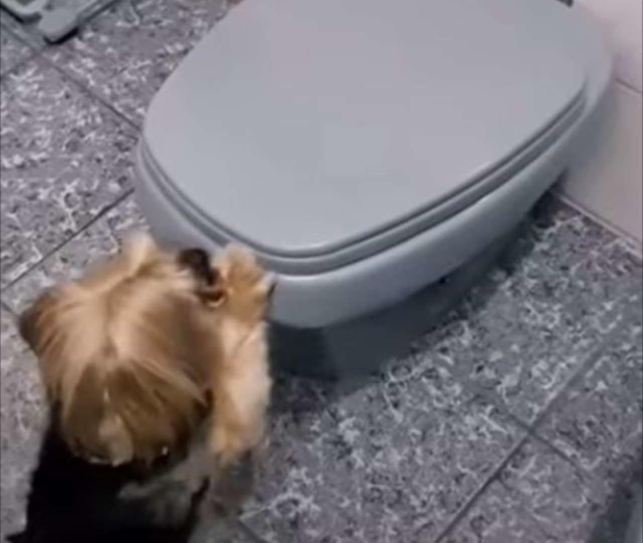 「上手にできました!」人間用のは蓋が開けられないほど大きいけれど、愛犬のためにちょうどいいサイズのおトイレが用意されていました!