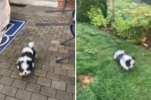 裏庭に初めて来て大喜びする子犬。ところが、飼い主もビックリする思わぬアクシデントが発生しました!!