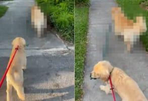 2匹の愛犬と楽しく散歩中と思ったら・・・、あれ?1匹のリードを持っているのは??