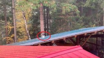 猫が屋根の上を飄々と歩いている・・・と思いきや、その猫の身にまさかまさかのアクシデントが!