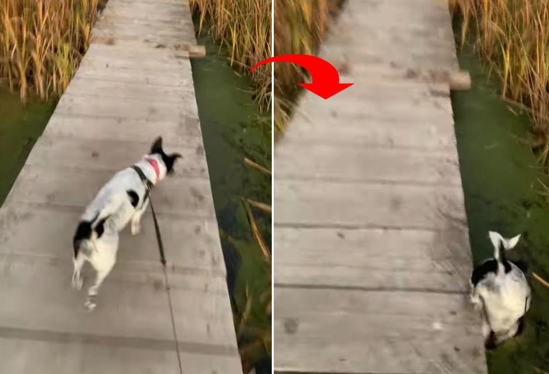 ええっ・・・?!お散歩をしていたら、愛犬がなんと藻を芝生だと勘違いして頭から突っ込んでいきました!!